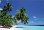 Leaning Palm Tree - POSTER - 36